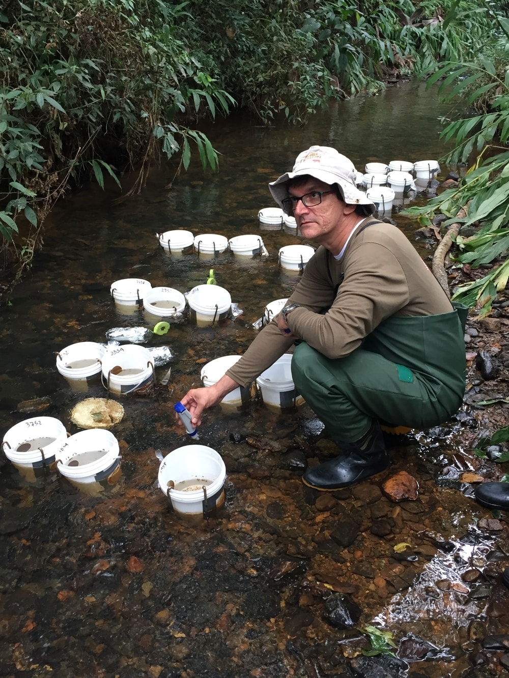 Mesocosmos implantados num rio para quantificar a supressão de algas (e produção primária) por invertebrados