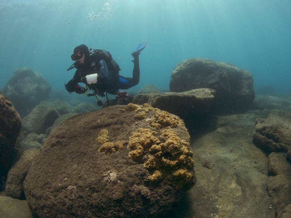 Mergulho científico para amostragens em ecologia bentónica